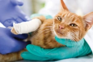 Pet Surgery in Hartford